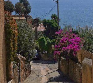 Stradina in discesa a Cargese circondata dai muri in pietra delle case e dalla vegetazione